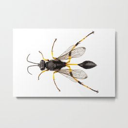 Wasp mud dauber species sceliphron destillatorium Metal Print