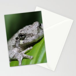 Grey Tree Frog Stationery Cards