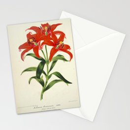 Lilium Sinicum Vintage Botanical Floral Flower Plant Scientific Stationery Cards