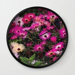 Livingstone daisy Wall Clock