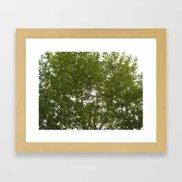 Let Some Sun Shine Through Framed Art Print
