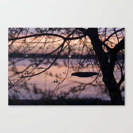 A Birds Breakfast Canvas Print