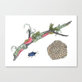 Lichen and Blue Fungus Beetle Canvas Print