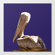 Pelican On Blue Canvas Print