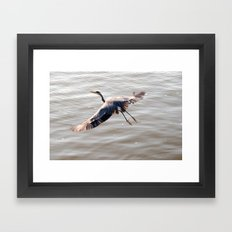 a great Blue Heron Framed Art Print