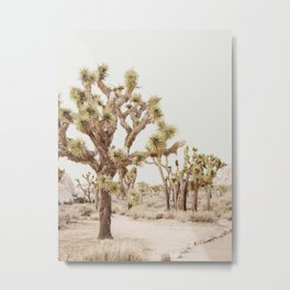 Pale Desert 2 - Joshua Tree Cactus Landscape Photography Metal Print