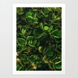 Greens Pattern Art Print