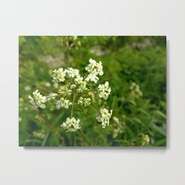 White Water Hemlock Metal Print
