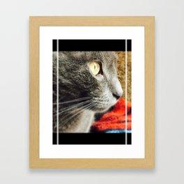 Ash the cat Framed Art Print