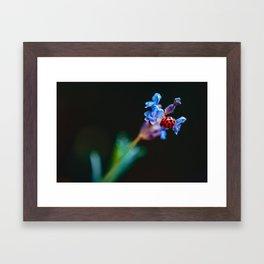 Ladybug on Flower ii Framed Art Print