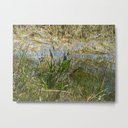 Beauty in the Everglades Metal Print