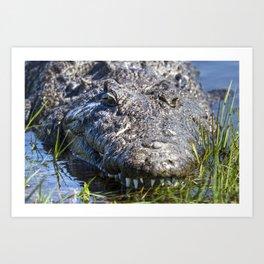 African Crocodile Art Print
