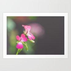 Little Vain Teasing Flowers In Vivid Magenta Art Print