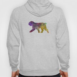 Spanish Water Dog in watercolor Hoody
