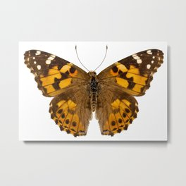 """Butterfly species Vanessa cardui """"Painted Lady"""" Metal Print"""