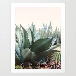 Desert Agave Art Print