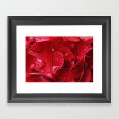 hydrangea flower with raindrops Framed Art Print