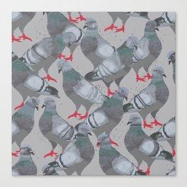 City Pigeons Canvas Print