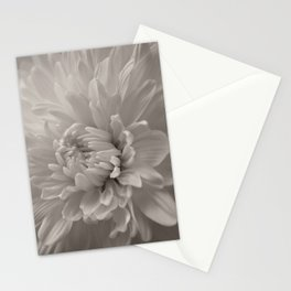 Monochrome chrysanthemum close-up Stationery Cards