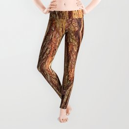 Old Gnarled Ficus Tree Trunk and Aerial Roots Texture Leggings