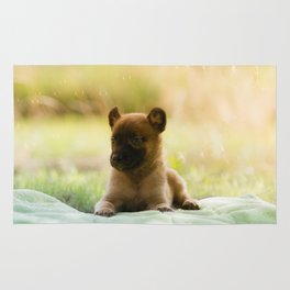 Malinois puppies in the soap blowing game Rug