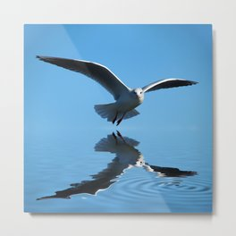 Seagull on blue sky Metal Print