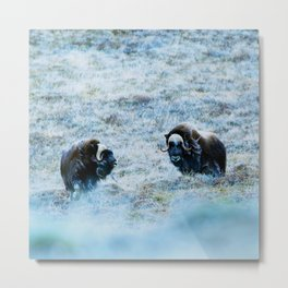 The North | Musk Oxen Metal Print