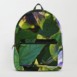 Shoo Fly - Apple of Peru - Nicandra Backpack