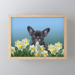 French Bulldog in Daffodils Field Framed Mini Art Print