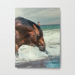 horse collection. Trakehner. swimm Metal Print