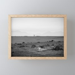 Lone lioness rests on African savanna Framed Mini Art Print