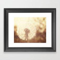 Dandelion Sunset Framed Art Print