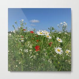 Colorful summer meadow with blue sky, white kammille, blue cornflowers, red poppies Metal Print