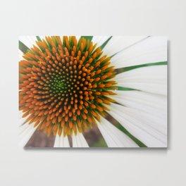 White Echinacea Metal Print