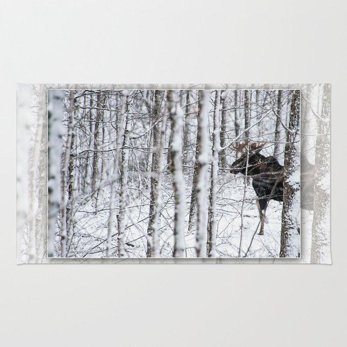 Glimpse of Bull Moose Rug