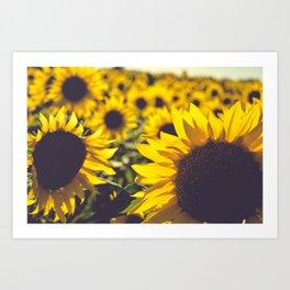 Summer Sunflower Love Art Print