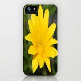 Bright Yellow Gazania Flower iPhone Case