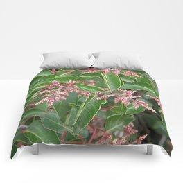 TEXTURES - Sugar Bush Comforters