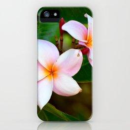 Plumeria 01 iPhone Case