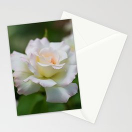 Beautiful White Roses Stationery Cards