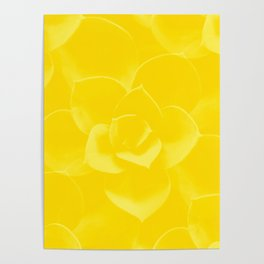 Succulent Plant Yellow Mellow Color #decor #society6 #buyart Poster