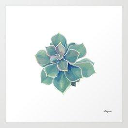california rock rose succulent Art Print