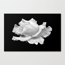 White Rose On Black Canvas Print