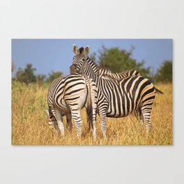 Life of the Zebras, Africa wildlife Canvas Print