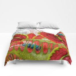 Beautiful And Deadly Comforters
