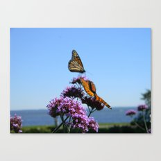 velvet butterflies Canvas Print
