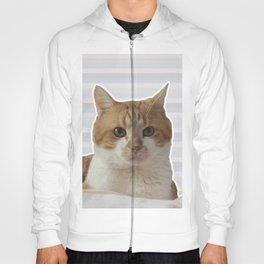 Red cat on a striped background. Hoody