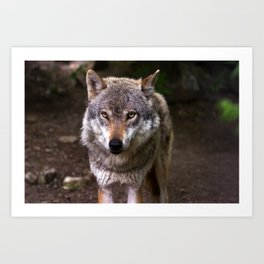 Wolf in the Woods Hunting Art Print