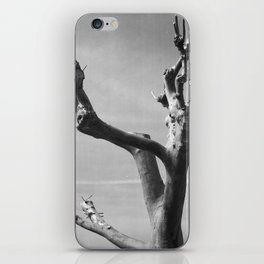 Platane iPhone Skin