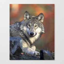 Wild Wolf Photo Canvas Print
